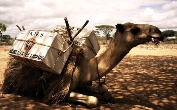 mobile-camel-library-kenya-